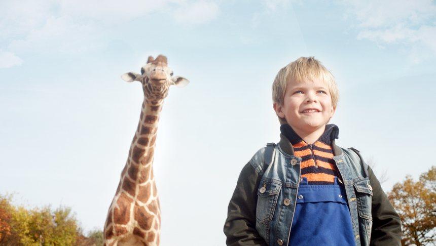 mein freund die giraffe